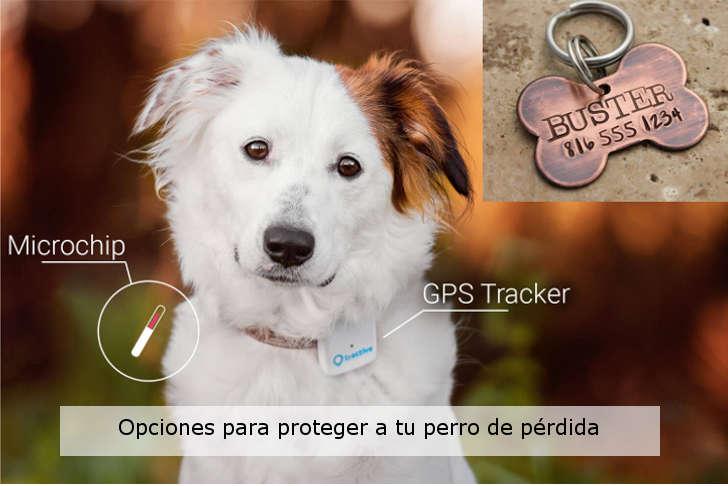 como-proteger-a-tu-perro-de-extravio