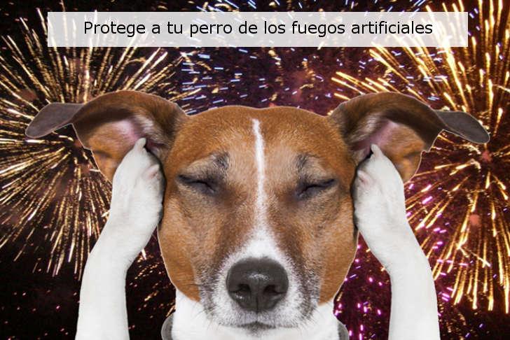 como proteger tu perro de fuegos artificiales
