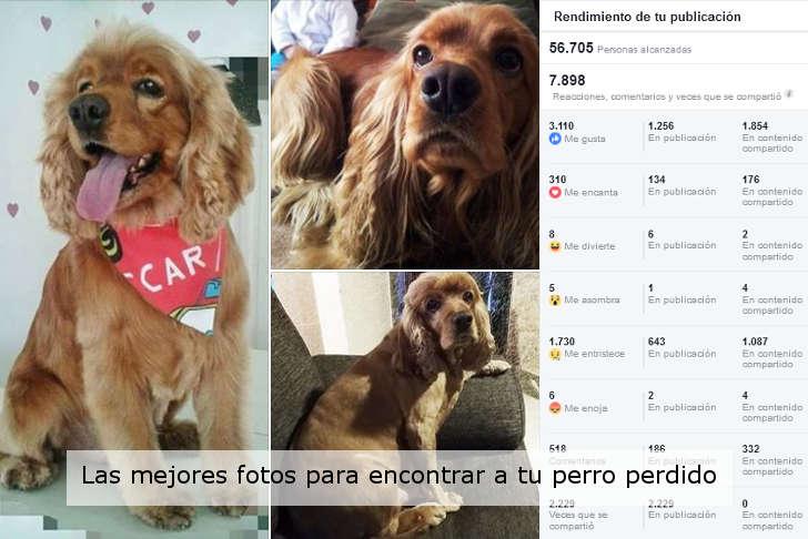 cuales son las mejores fotos para recuperar a tu perro perdido