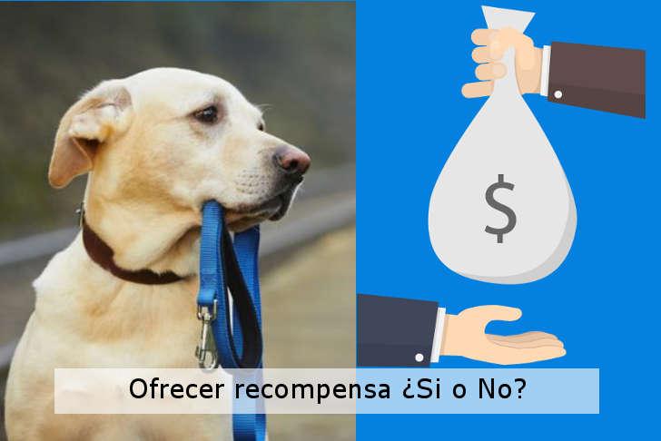 ofrecer recompensa por un perro perdido si o no