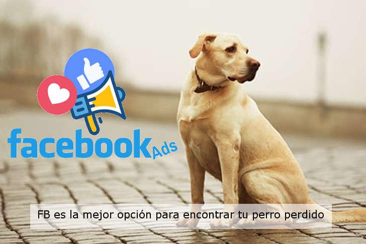 Los anuncios de facebook son la mejor opcion para encontrar tu perro perdido