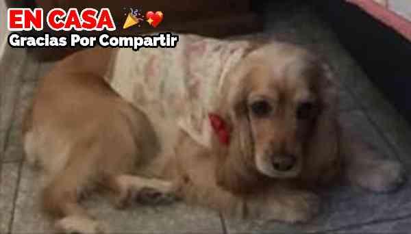 Fiona se perdió el 30 de Marzo en Colima. Es hembra , talla mediana , color miel , ojos café claro y un mechón blanco pequeño en el copete, necesita su medicamento.