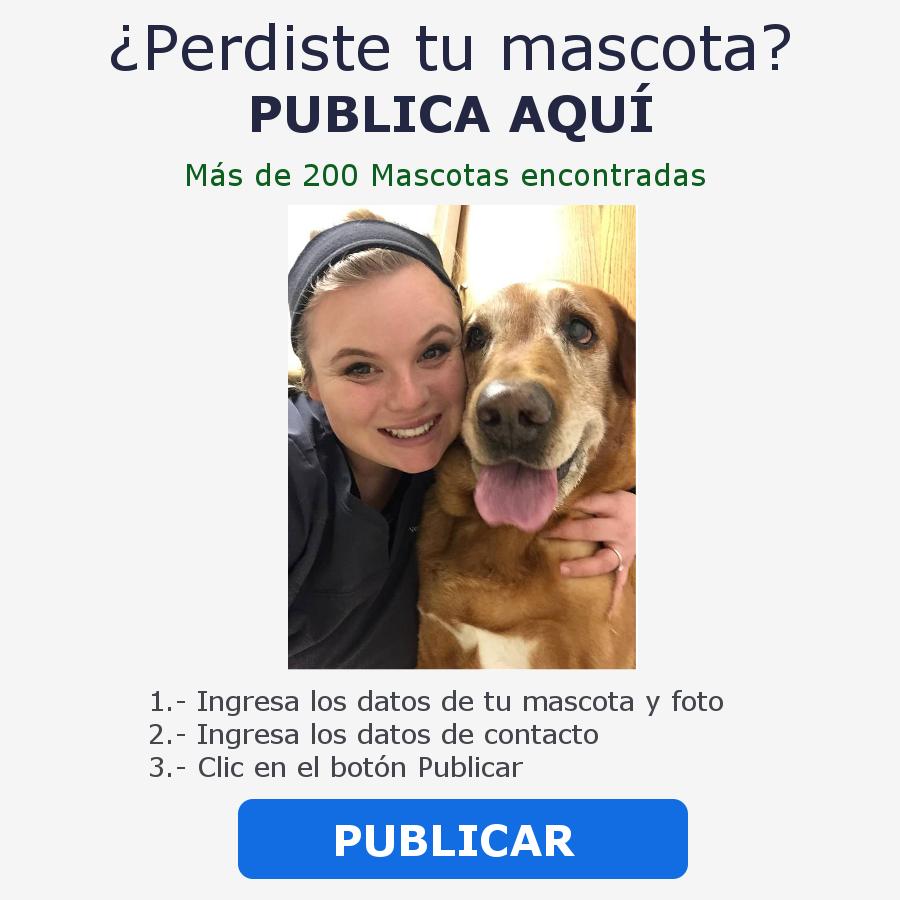 perdiste tu mascota publicala en nuestra pagina
