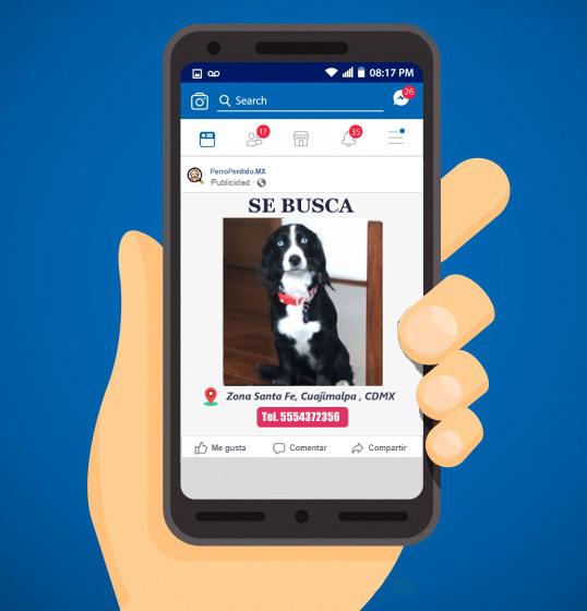 ejemplo de anuncio en facebook perro perdido
